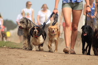 Easter Pack Walk for Dogs